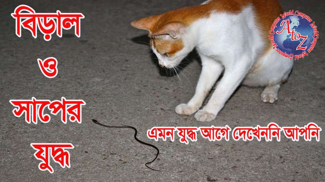 Cat & Snake Playing in Road